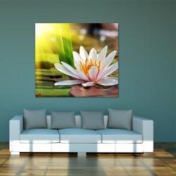 Obraz szklany lilia wodna