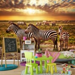 Fototapeta zebry
