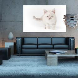Obraz szklany biały kot