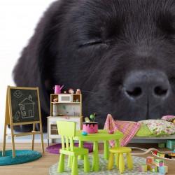 Fototapeta do pokoju dziecka czarny pies