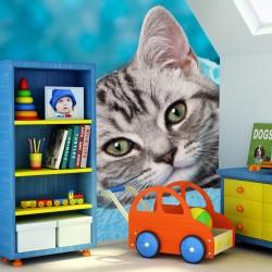 Fototapeta do pokoju dziecka kot na niebieskim tle