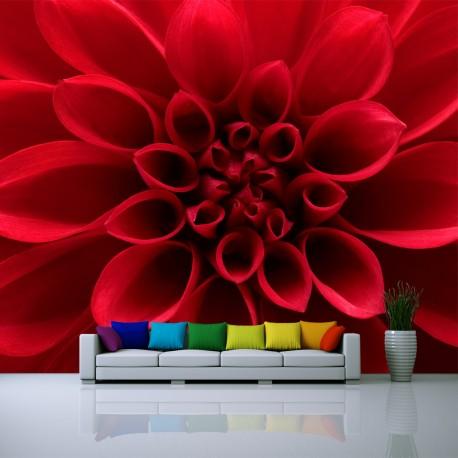 Fototapeta do salonu czerwona dahlia
