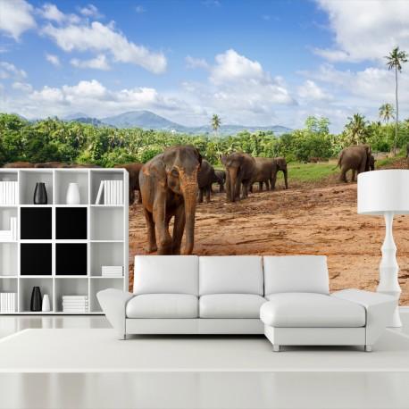 Fototapeta do salonu słonie
